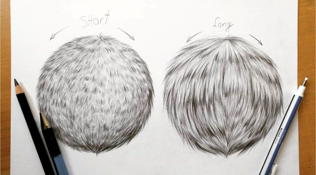 drawing tutorial how to draw realistic fur in graphite by leontine