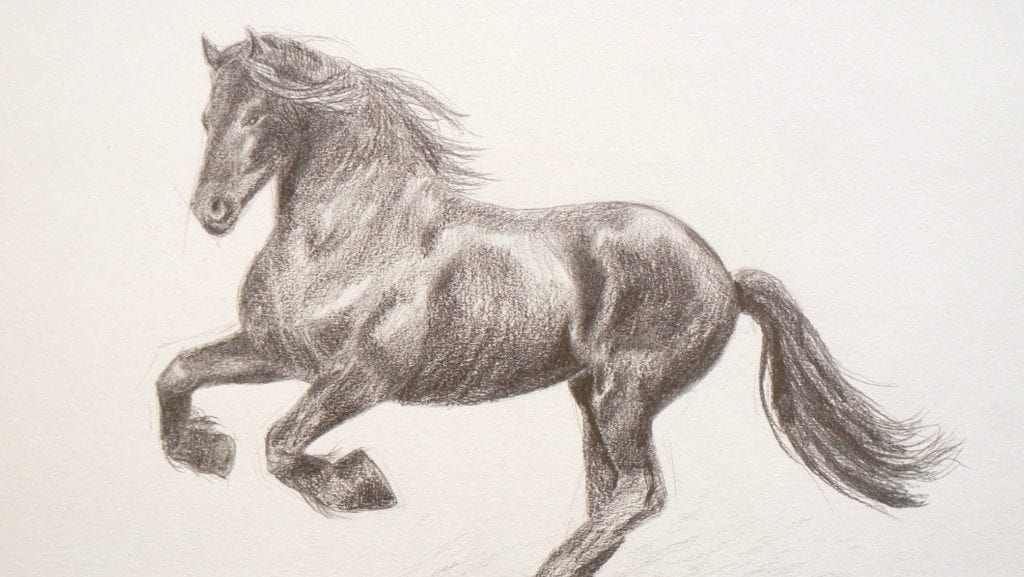 Learning To Draw: How To Draw A Horse By Fine Art-Tips
