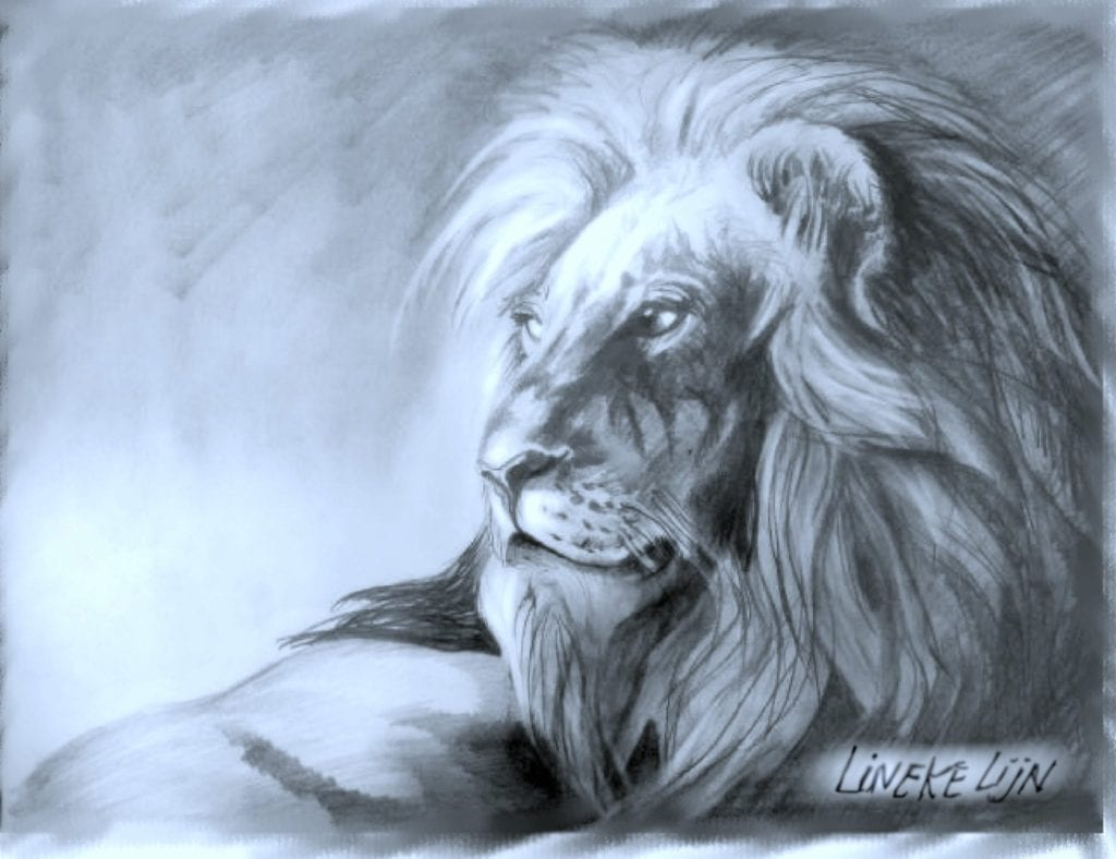 How To Draw A Lion In Graphite For Beginners Easy