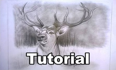 Deer Drawing In Graphite Very Easy For Beginners Hildur K O Art Blog