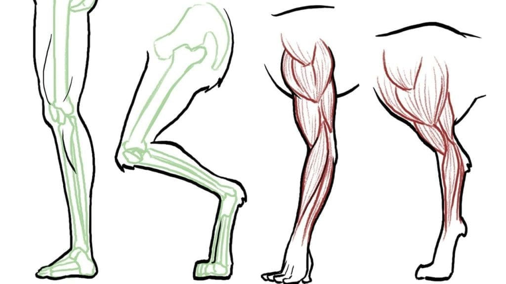 how to draw animal legs dogs cats horses bears etc