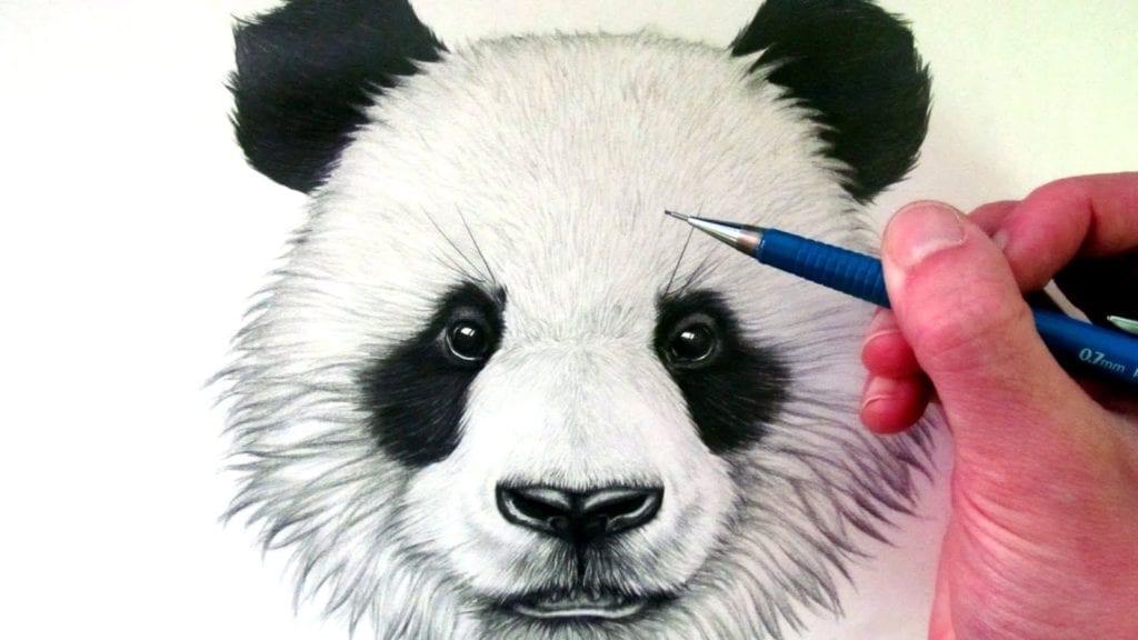 How To Draw A Panda Bear Hildur K O Art Blog Amp Shop