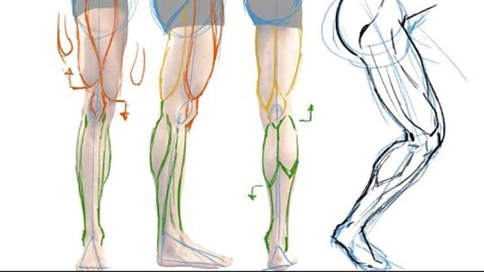 How To Draw The Muscles Of The Leg The Easy Way