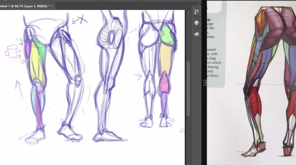 Drawing Human Anatomy Hildurko Part 3