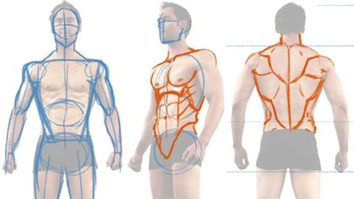 How to Draw the Male Figure and Torso Muscles » Hildur.K.O