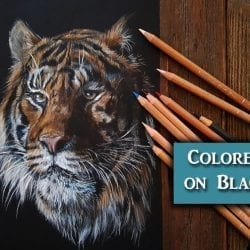 Drawing a Tiger in Colored Pencil on Black Paper – Tips with Lachri