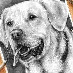 HOW TO DRAW A DOG! Realistic Drawing Tutorial with Charcoal