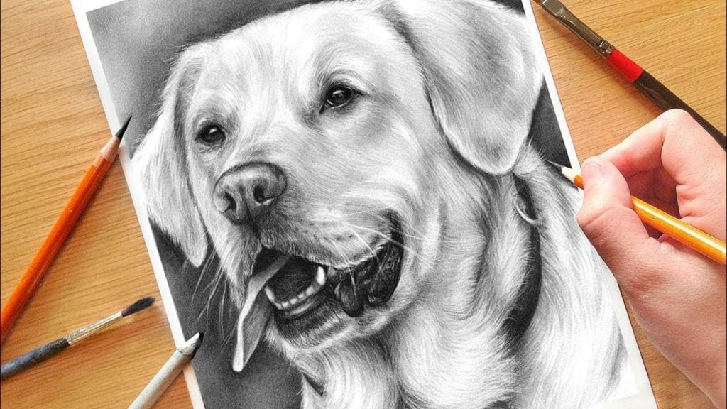 How To Draw A Dog Realistic Drawing Tutorial With